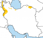 iran kurd middleeast tagme  rating:Questionable score:1 user:AyyubTheMapper