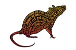 jew jew_rat rat tagme  rating:Questionable score:0 user:SamHyde