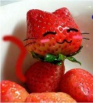 cat photo strawberry tagme  rating:Safe score:0 user:nom