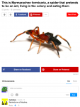 english_text pepe spider tagme text  rating:Safe score:0 user:usernam