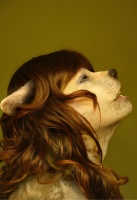 bokehofmud canine ears edit female photo_manipulation wolf  rating:Safe score:0 user:Anonymous
