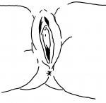 pussy snatch twat vagina vulva  rating:Explicit score:-1 user:finckendorff